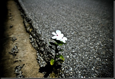 Flower in Ashes