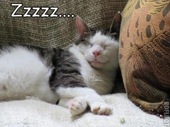 The Importance of Sleep…
